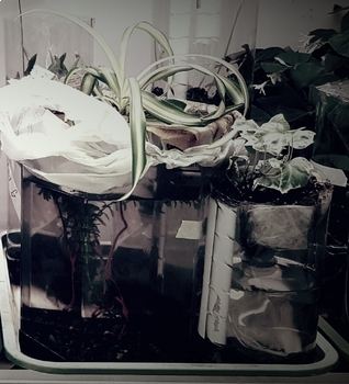 Ecosystem Final Project