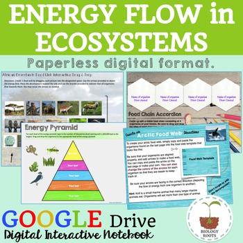 Ecology Energy Flow- Digital Interactive Notebook