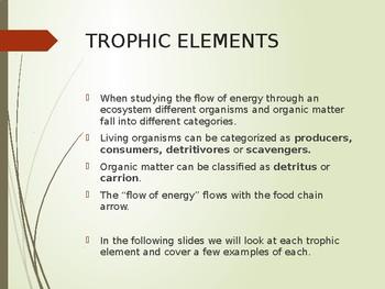 Ecology Energy Flow: Trophic Elements Power Point (editable)