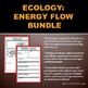 Ecology: Energy Flow, Trophic Levels, Food Chains & Web Bundle