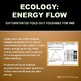 Ecology: Energy Flow, Trophic Levels, Food Chains and Food Web Foldable for INB