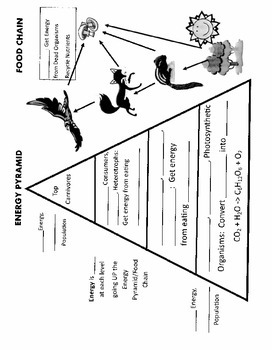 Ecology Energy Pyramid