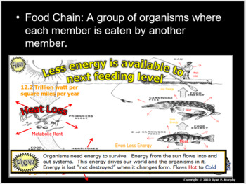 Food Chain Lesson