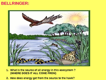 Ecology Food Chains and Pyramids Energy Transfer PPT Lesson