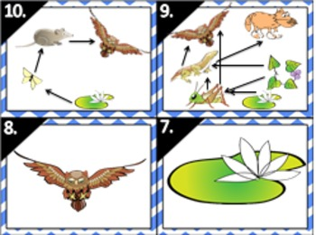Ecology: Food Web Food Chain Matching Activity Task Cards (Fully Editable, Key)