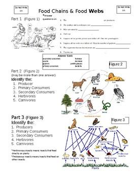 Ecology Food Webs