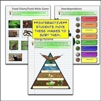 Ecology Google Drive Interactive Notebook