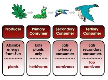 Ecology: Habitats, Biomes, Food Chains, Food Webs, Interactions, Pyramids