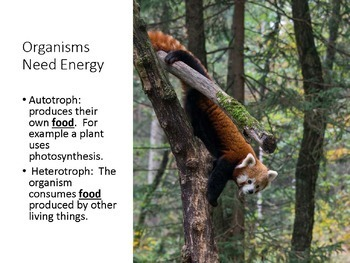 Biotic Factors for Middle School: Ecology Lesson 2