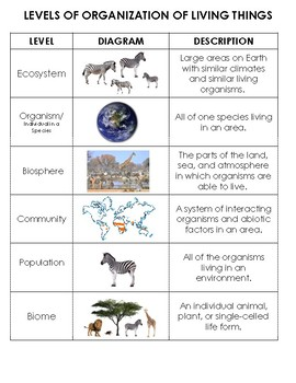 Ecology Levels of Organization Sort: Organism to Biosphere, cut and paste