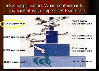 Food Chain Lesson, Biomagnification of Pollution
