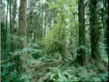 Ecology: Populations and Succession