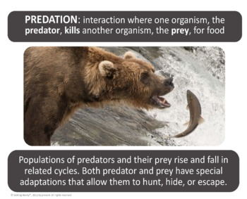 Symbiosis, Competition, and Predation