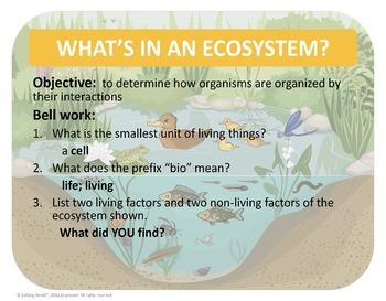 Ecosystem Levels of Organization