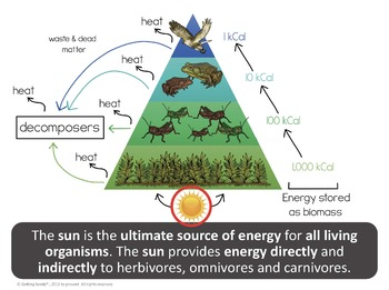 Food Chains Food Webs And Energy Pyramids By Getting Nerdy With Mel