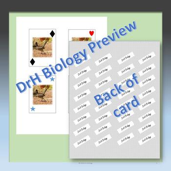 Ecology Pyramid WAR Card Game