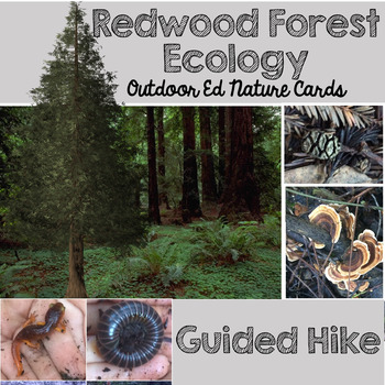 Ecology Questions Cards: Coastal Redwoods