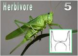 Ecology Quiz, Herbivore, Carnivore, Ominvore