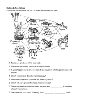 Ecology Review Stations