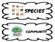 Ecology -Science Vocabulary Cards- Science Word Wall- Symbiosis Food Chain