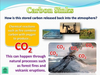 Ecology Unit comprehensive review PowerPoint