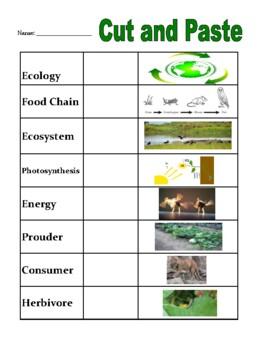Ecology Vocabulary Bundle
