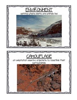 Ecology Vocabulary Cards