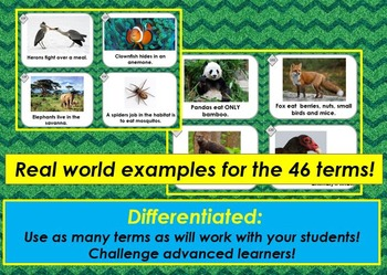Ecology Vocabulary Matching Sort w/ 46 Terms, Definitions & Real World Examples