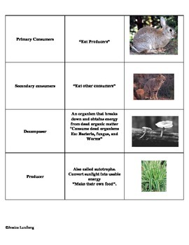 Ecology Word Sort