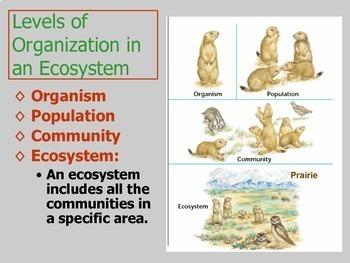 Ecology (advanced/entire unit)