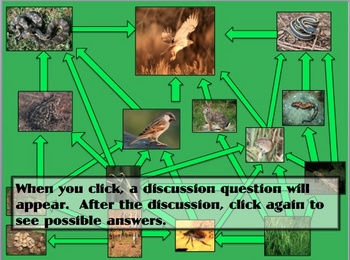 Ecology and Ecosystems PPT presentation