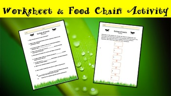Ecology of Insects Lesson with Power Point, Worksheet, and Food Chain Activity