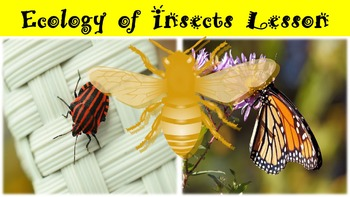 Ecology of Insects Lesson with Power Point, Worksheet, and