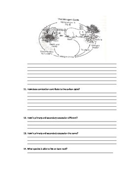 Ecology quiz- Cycles and Succession