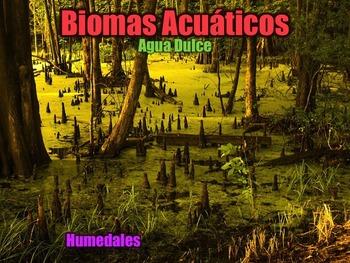 Ecosistemas, Biomas, y Hábitats - Presentación en PowerPoint y Actividades