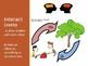 Ecosystem Academic Vocabulary