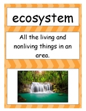Ecosystem / Biome Vocabulary Charts