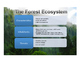 Ecosystem Cards for Cooperative Group Problem Solving