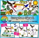 Ecosystem Clipart (Energy Pyramid, Food Chain, Food Web)