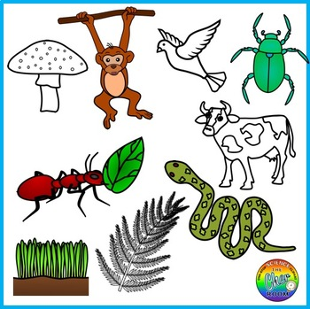 Ecosystem Clipart (Energy Pyramid, Food Chain, Food Web)