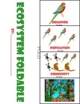 Ecosystem  Foldable and Graphic Organizer