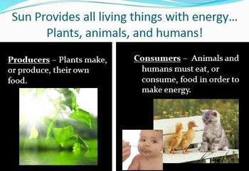 Ecosystem Food Chain Web PowerPoint Unit Common Core