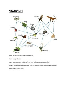 Ecosystem Interactions, Food Chains, Food Webs