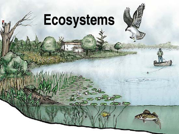 Ecosystem Notes PowerPoint
