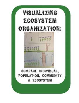 Ecosystem Organization:Compare Individual, Population, Community & Ecosystem