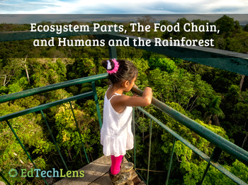 Ecosystem Parts, The Food Chain, and Humans and the Rainforest EPUB