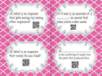 Ecosystem QR Code Task Cards