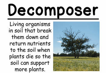 Ecosystem Restoration Vocabulary Cards