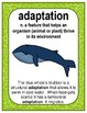 Ecosystem Vocabulary - Adaptations Part 1