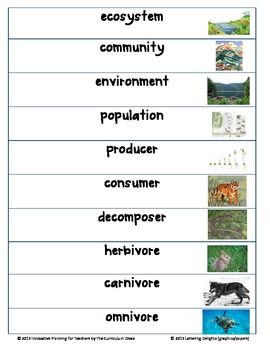 ecosystem vocabulary cards with pictures by the curriculum divas. Black Bedroom Furniture Sets. Home Design Ideas